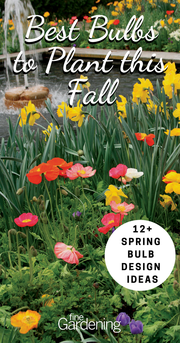 12 Spring Bulb Designs To Plant Now Bulbs Garden Design Spring Garden Flowers Fall Flowers Garden