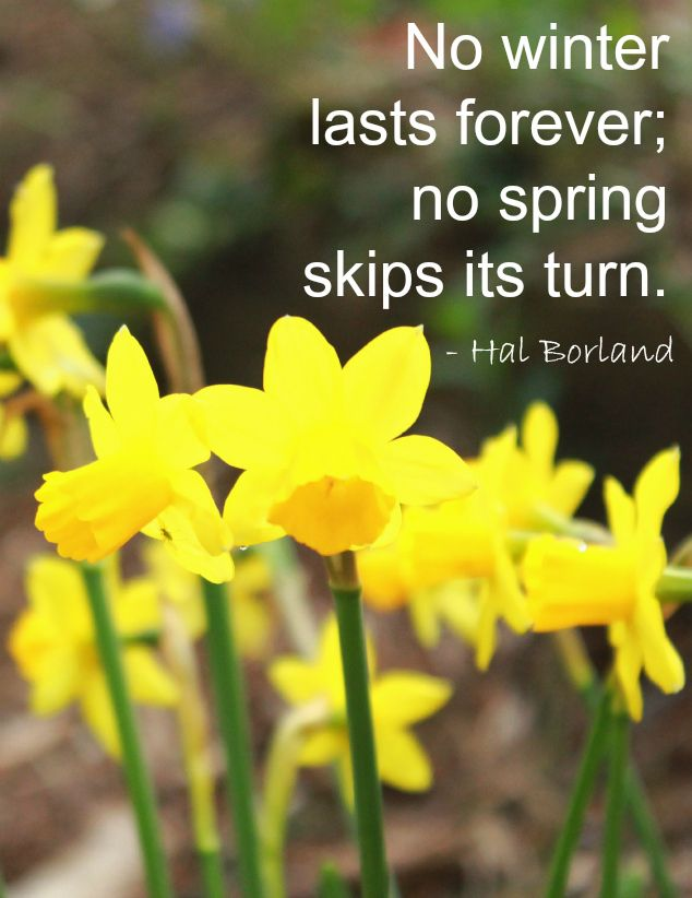 Spring Quotes Beauteous The Artful Year Book  Celebrating The Seasons & Holidays With .