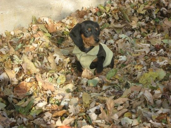 Home Remedy Diy Natural Product To Get Your Pup To Stop Peeing