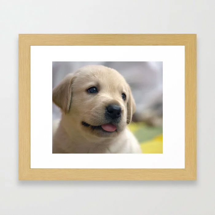 Pin On Labrador Retriever