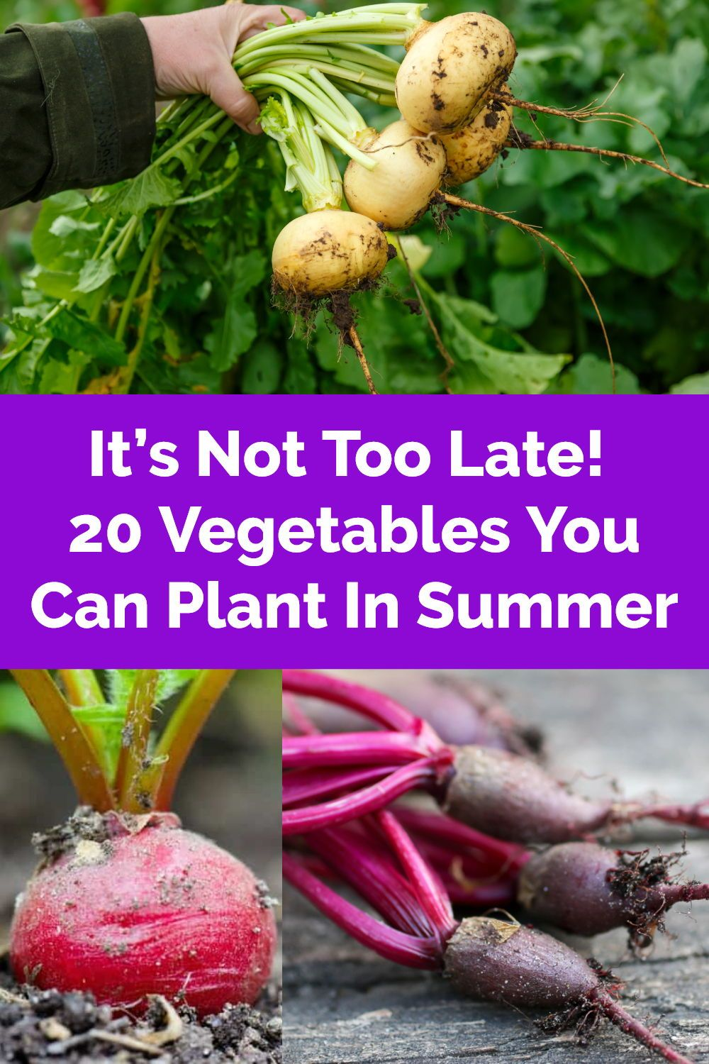 It S Not Too Late 20 Vegetables You Can Plant In Summer Vegetables Plants Growing Fruit
