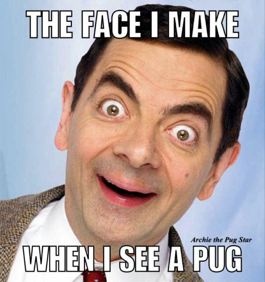Yay Pugs More Pug Cute Pugs Pug Quotes Baby Pugs See more ideas about meme party, meme costume, bones funny. pinterest