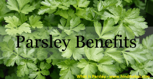 Parsley in Hindi, what is parsley in hindi Parsley