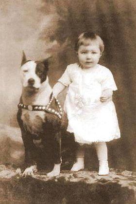 Pitbulls Nanny Dog Dogs Kids Pitbull Terrier