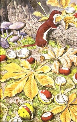"""Weasel and chestnuts. (from vintage English """"Ladybird"""" storybooks)"""