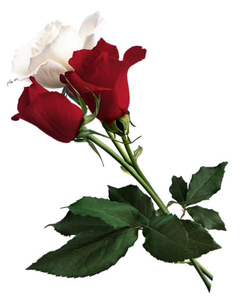 White And Red Roses Png Picture Red Roses Wallpaper Flower Bouquet Png Beautiful Flowers