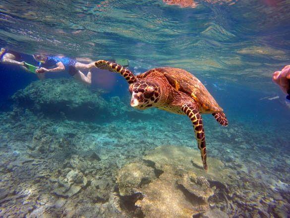 Nadar con mantas raya y tortugas