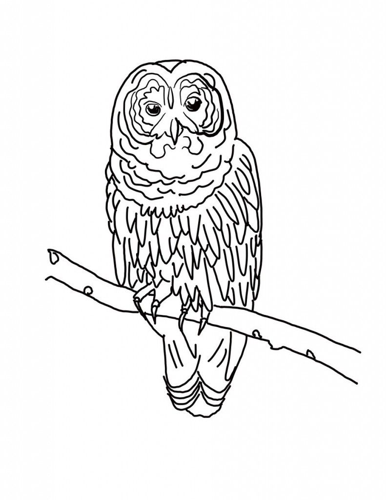 Free Owl Coloring Pages | Owls & Other Birds | Pinterest | Owl ...