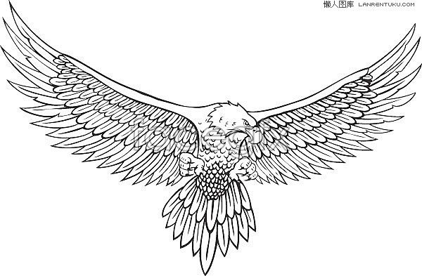 A spread eagle line drawing vector free download