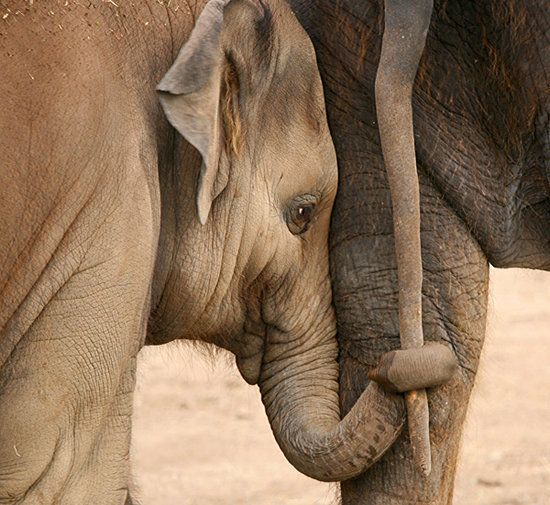 Sometimes you just need someone to hold your hand... or trunk... whatever.