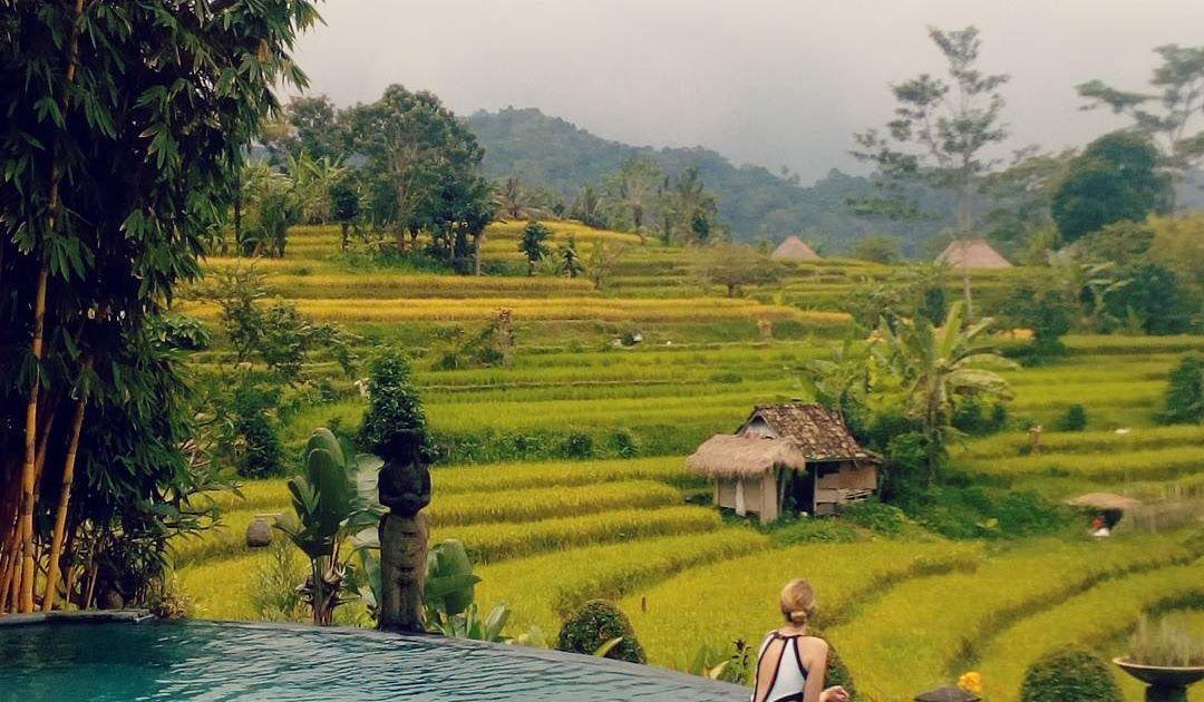 29 Pemandangan Sawah Indah Di Bali Hotel Murah Dengan Kolam Renang Sawah Di Bali Hanya 500 Ribuan Download Wisata Alam Jatiluw Di 2020 Pemandangan Bali Foto Alam