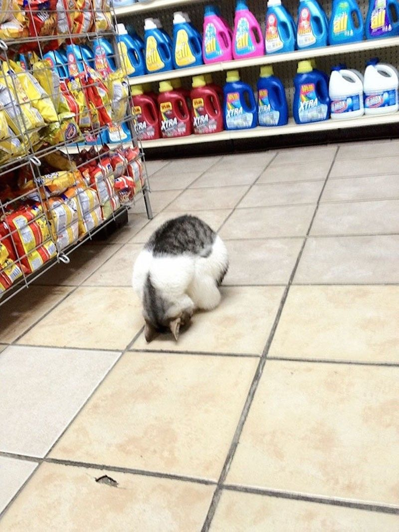 When Grocery Shopping Gets Really Boring Cat Sleeping Super Cute Animals Cats