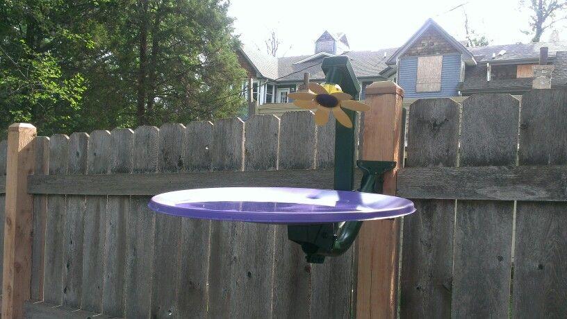 Satellite  dish birdbath.