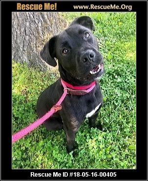 Tennessee Dog Rescue ― ADOPTIONS ― Dog