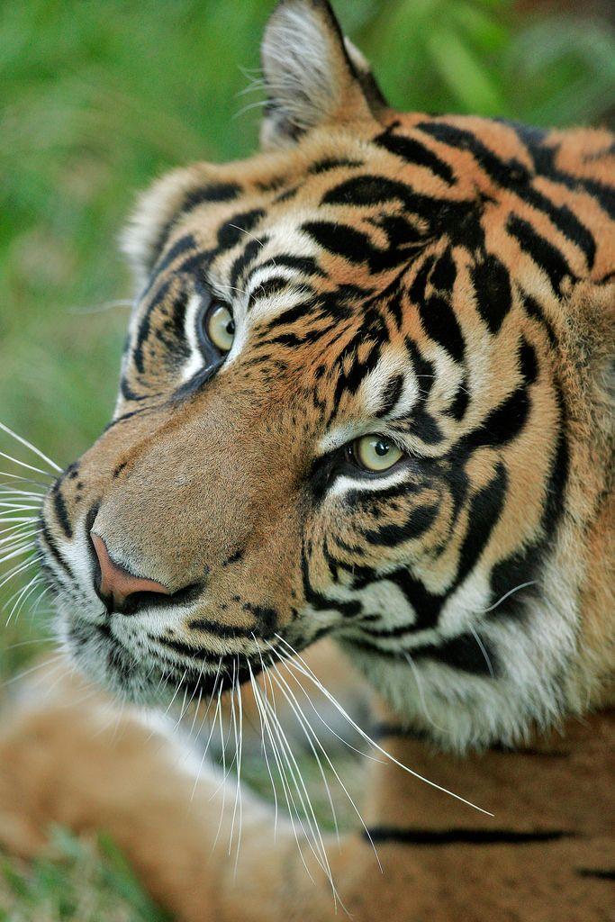 Thomas_25Q0094 (With images) San diego zoo safari park
