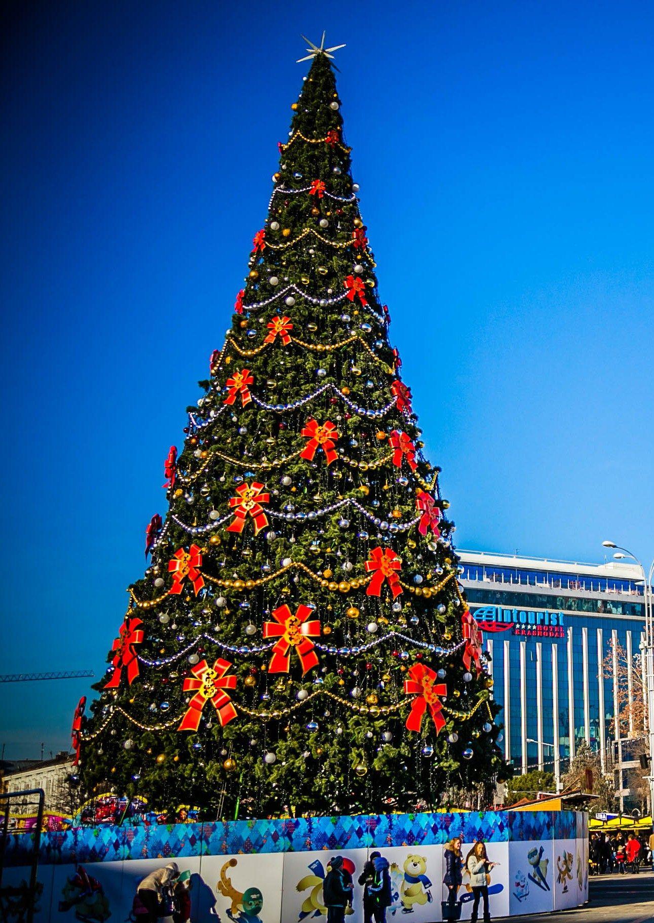 главная елка Краснодара