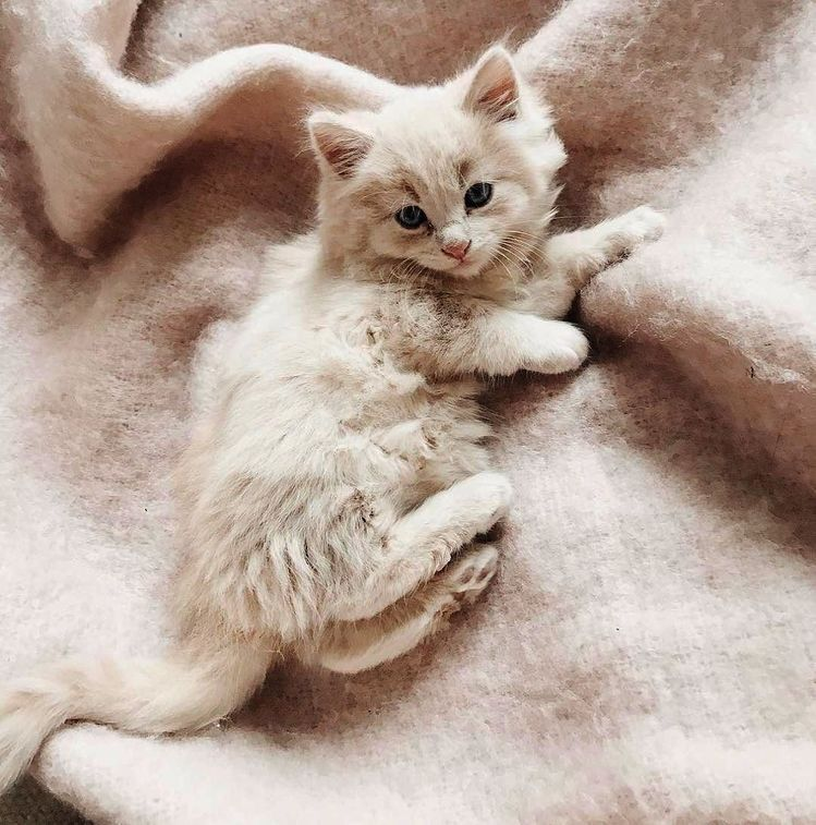 ☆P I N T E R E S T kyleighrreese☆ Cats and kittens