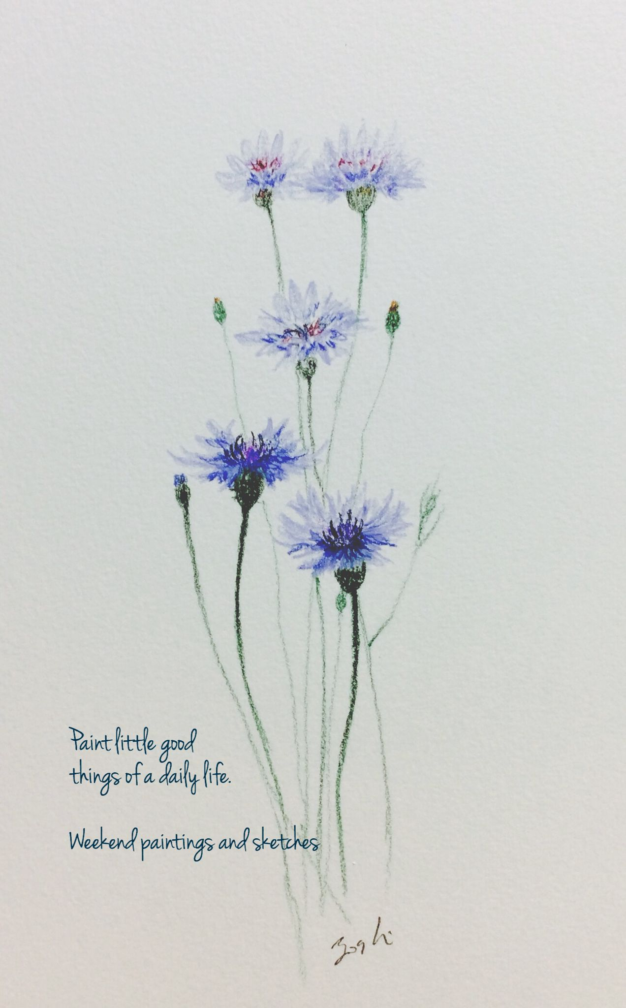 Cornflowers 3 Watercolour Pencils Paper Winsor Newton Cotman 227 X 158mm Language Of Flower Delic Watercolor Flowers Paintings Floral Watercolor Watercolor