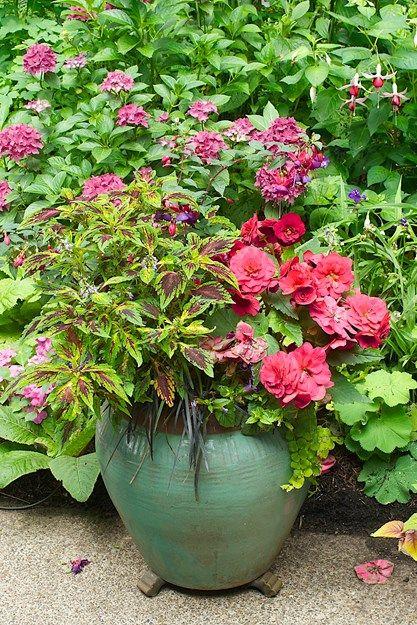 "Shade Container Plants Janet Loughrey Mophead Hydrangea Begonias Coleus ""Wizard Sport"""