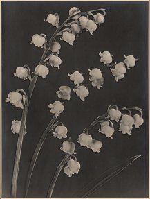 Alexis Delcroix, Les clochettes blanches blanches,  +/- 1935, Belgium