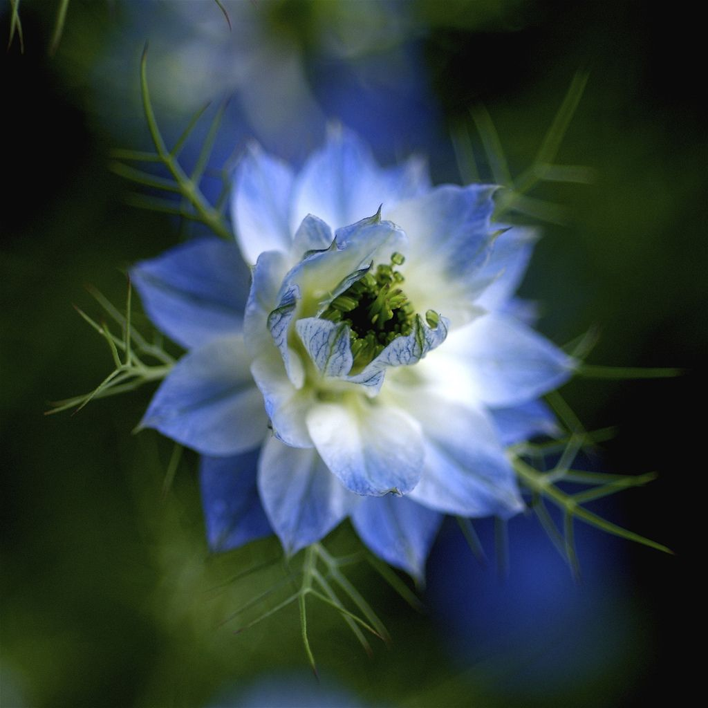pretty flowers pictures | ... for the warmth and pretty flowers, especially the blue flowers