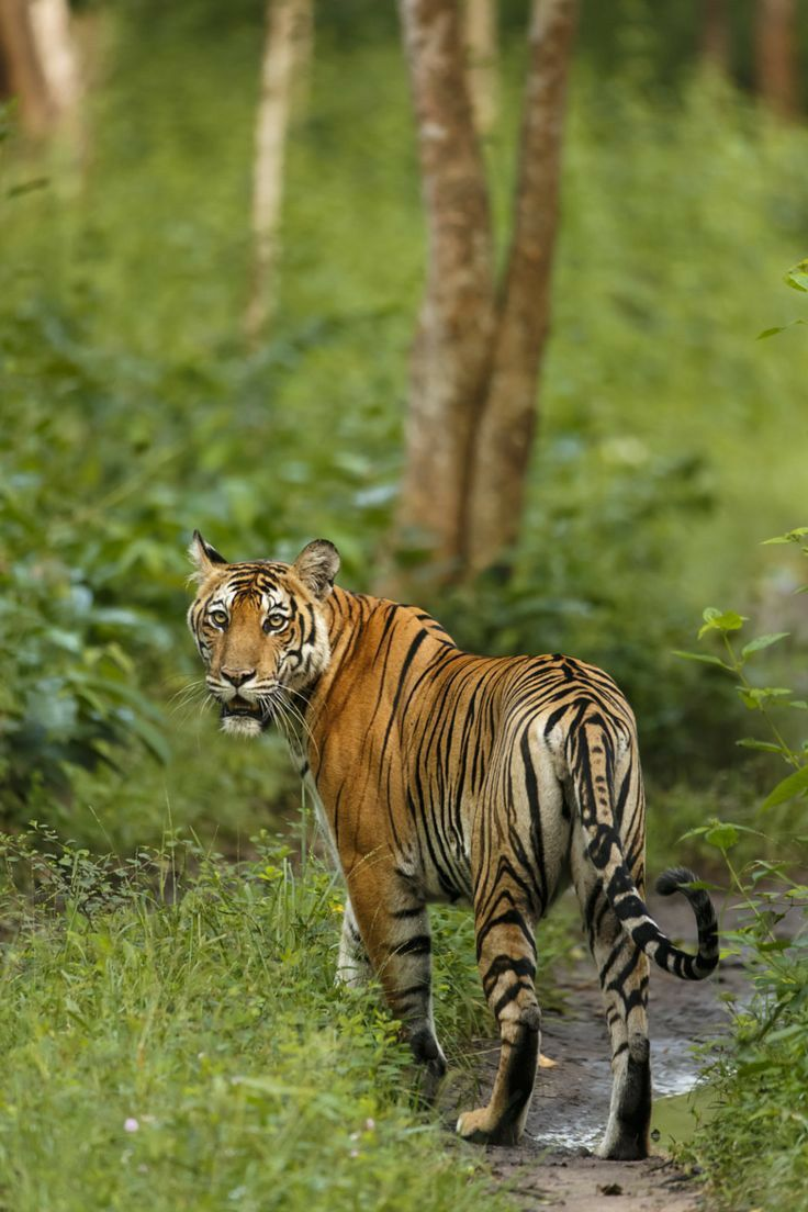 Pin by Gsuthar on art Tiger photography, Animals wild