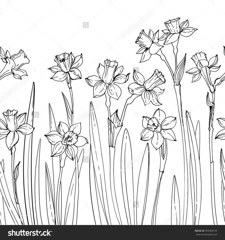 Daffodils Flower Drawing Flower Line Drawings Daffodils