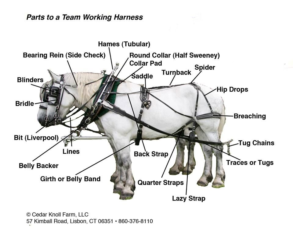 parts to a team harness from cedar knoll draft horses big boys tack and