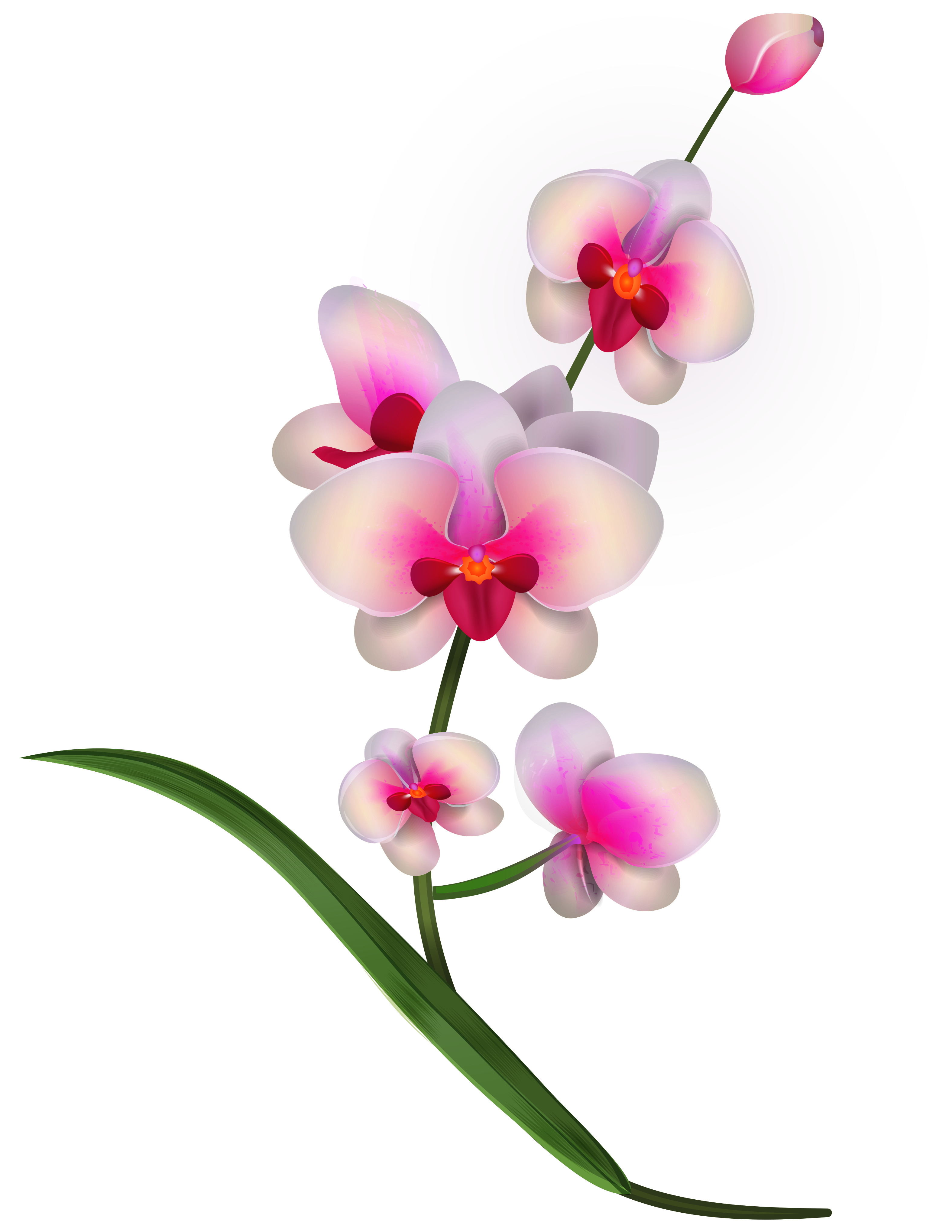 Orchid Clipart Png Image Gallery Yopriceville High Quality Images And Transparent Png Free Clipart Orchid Drawing Digital Flowers Blossoms Art
