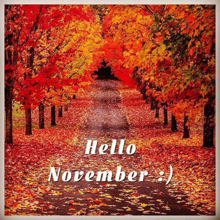 Hello November :) #november Hello November Fall Autumn Road Leaves