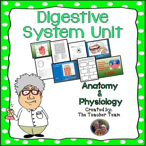 Digestive System Unit | Anatomy and Physiology | Human ...
