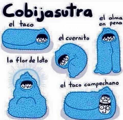 Dormir Cobija Chiste Humor Love Memes Funny