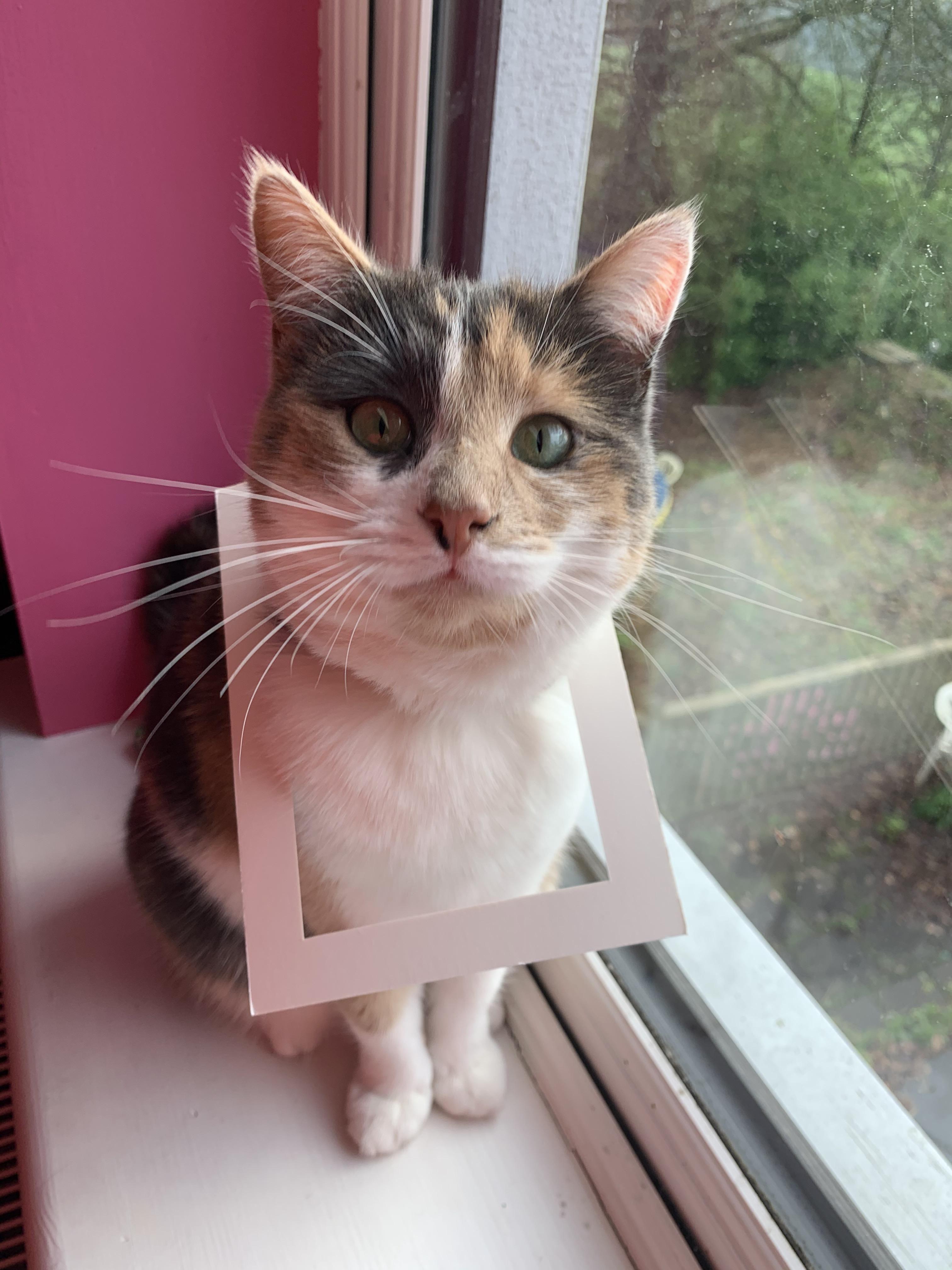 Picture puurfect https//ift.tt/2ukX8qI in 2020 Cat