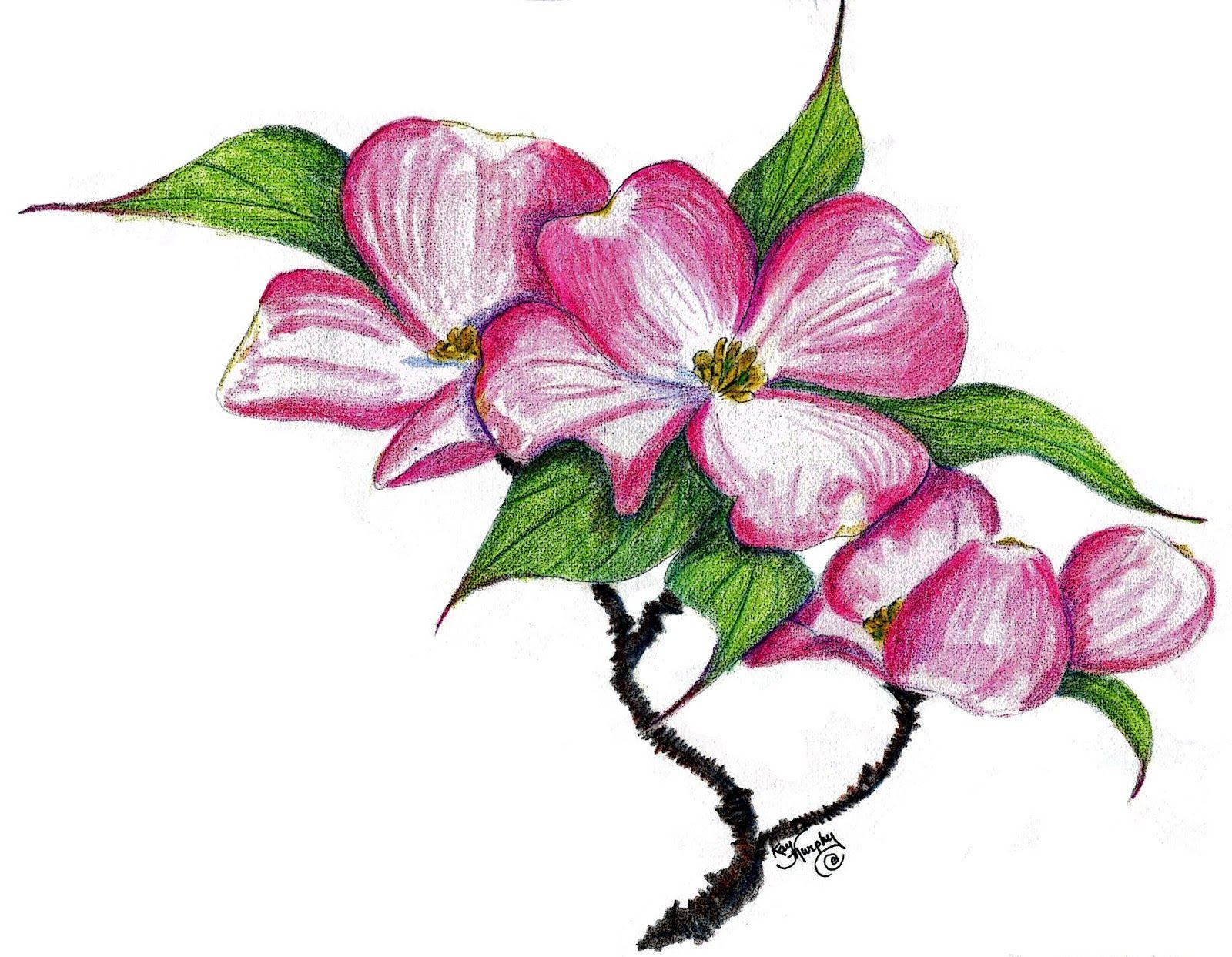 Kay Murphy S Studio New Colored Pencil Pink Dogwood Flower