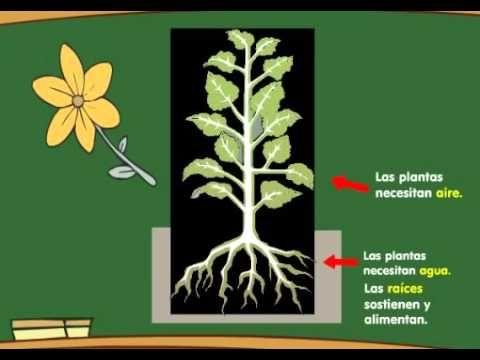 Partes de las Plantas y la Fotosíntesis   Aula365