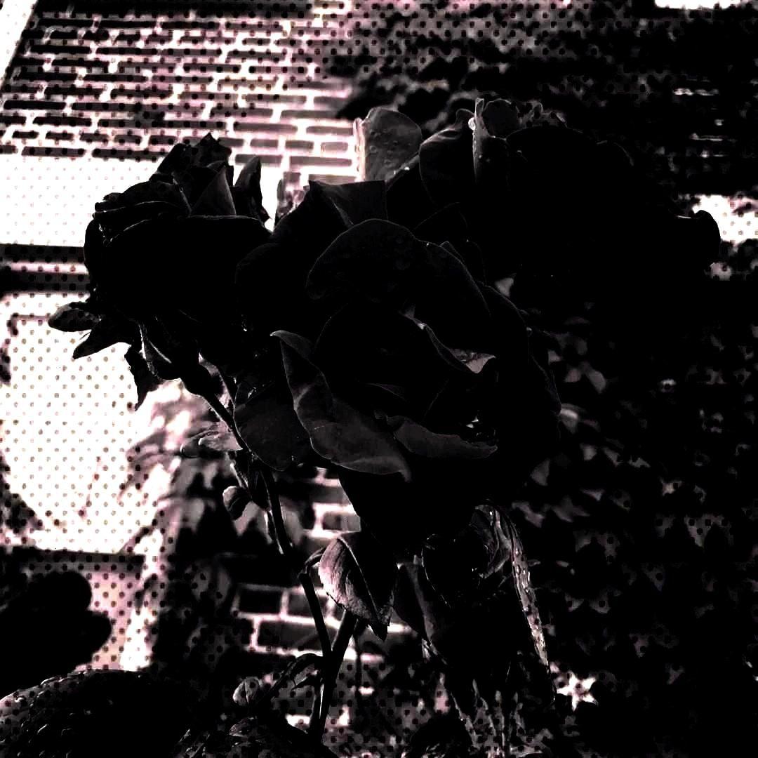 - - - - -Bed of thorns - - - - - - -of thorns - - - - - - -Bed of...of thorns - - - - - - -Bed of t