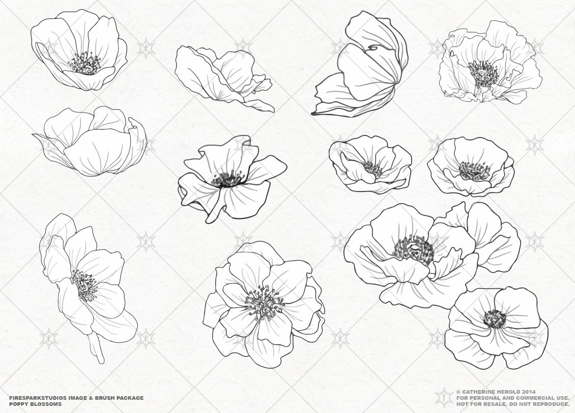 Vector Poppy Blossoms Illustrations En 2020 Amapola Dibujo