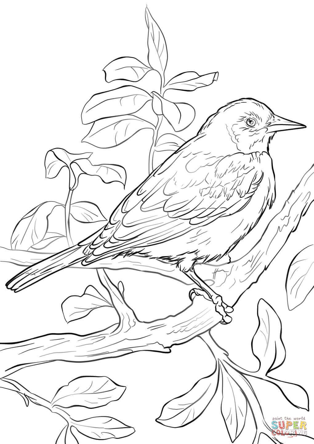 Baltimore Oriole Bird Template Free Google Search Bird Coloring Pages Bird Drawings Baseball Coloring Pages