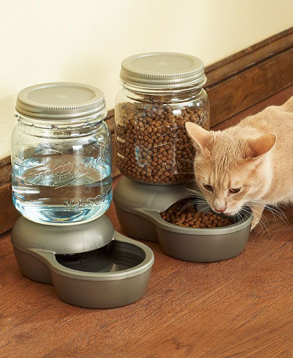 Petmate Food Dispenser Cool Petmate® Mason Jar Waterers Or Feeders  Cats  Pinterest  Cat Inspiration