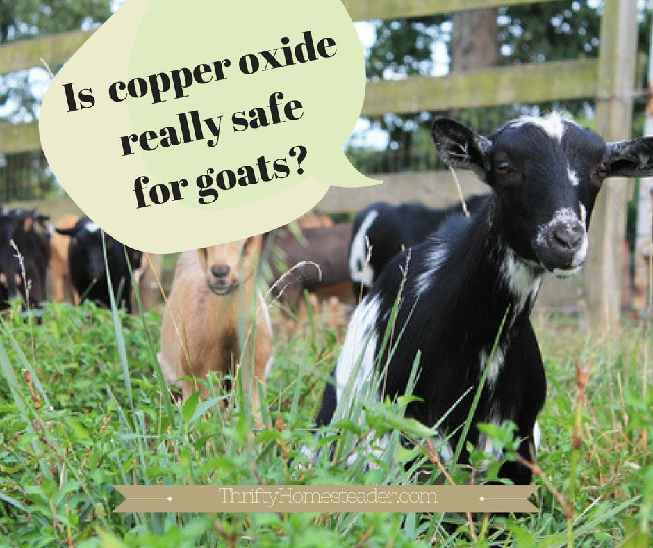 Is copper oxide really safe for goats | Goats, Homesteads and Livestock