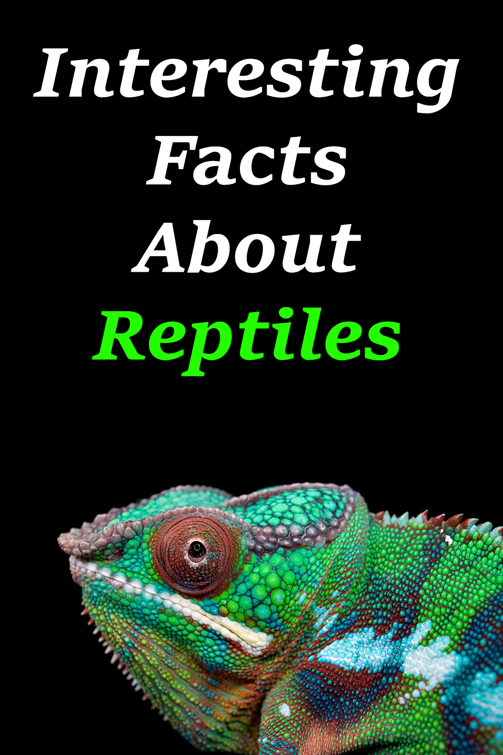 Interesting Facts About Reptiles Reptiles Reptiles Facts Reptiles Pet