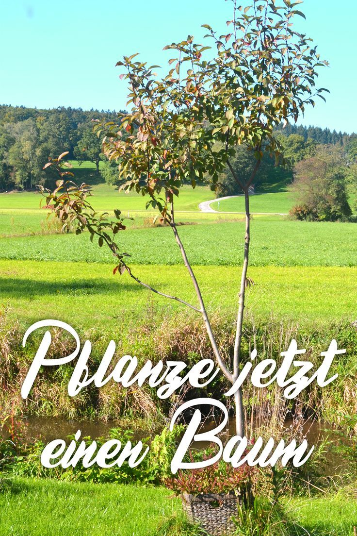 Garten Lounge Planer Baum Popular Pinterest
