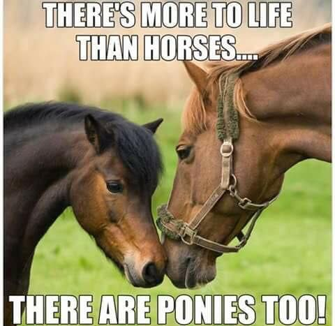 Funny Horse Quotes There's more to life than horses, there are ponies, too! Horse  Funny Horse Quotes