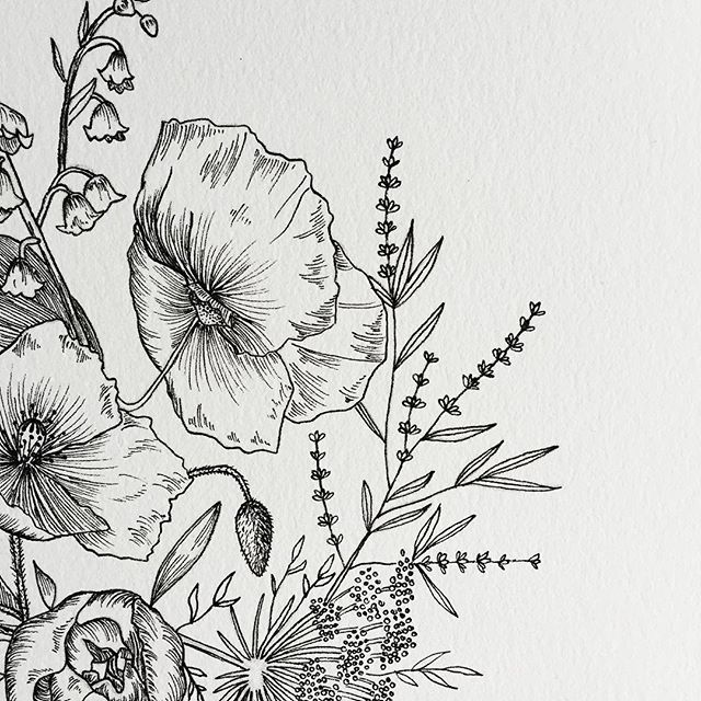 Esther Clark Dibujos Dibujos De Flores Lapices De Colores