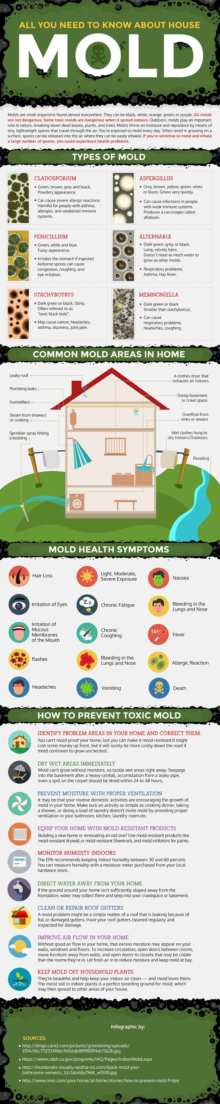 How can you tell if you have black mold  A plumbers guide on how to prevent mold in your house Do on audit