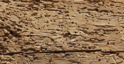Woodworm Treatment in Waen Woodworm Treatment in Waen