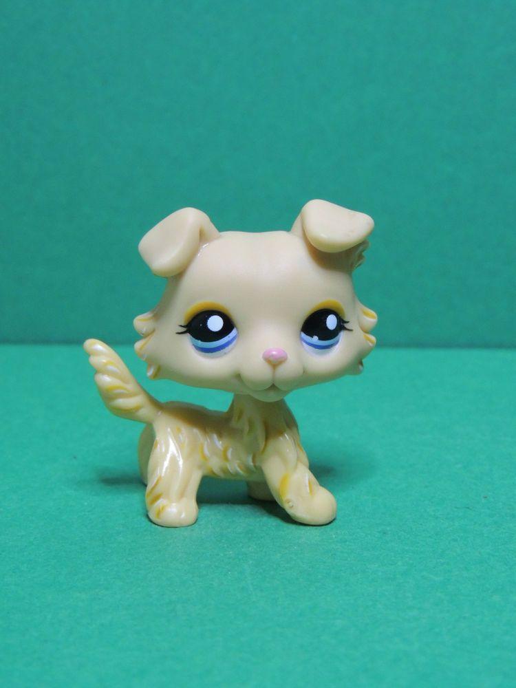 1194 chien dog colley yellow collie purple eyes lps - Chien pet shop ...