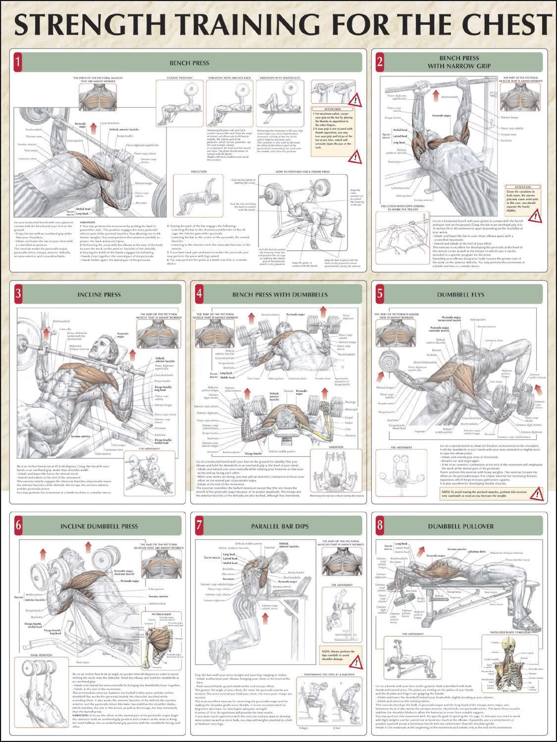 The Role the Brain Plays in Muscle Fatigue | Pinterest | Strength ...