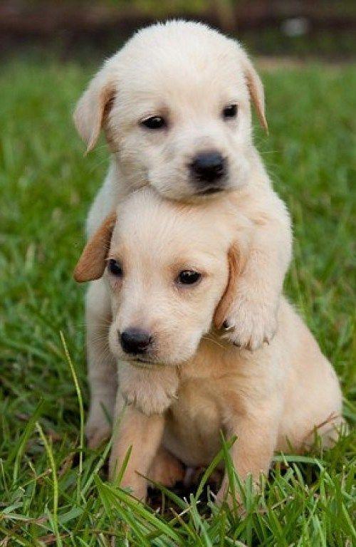 Es Imposible Que No Se Derrita El Corazón Cuando Se Ven Cachorritos