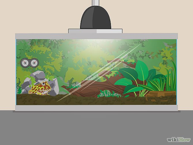 Set Up A Pacman Frog Enclosure Pacman Frogs Pacman Frog Frog